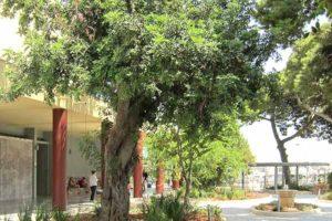 archaeological museum heraklion crete