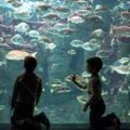 """""""Θαλασσόκοσμος"""", όλος ο κόσμος της θάλασσας"""