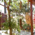 Agioklima garden dcoration